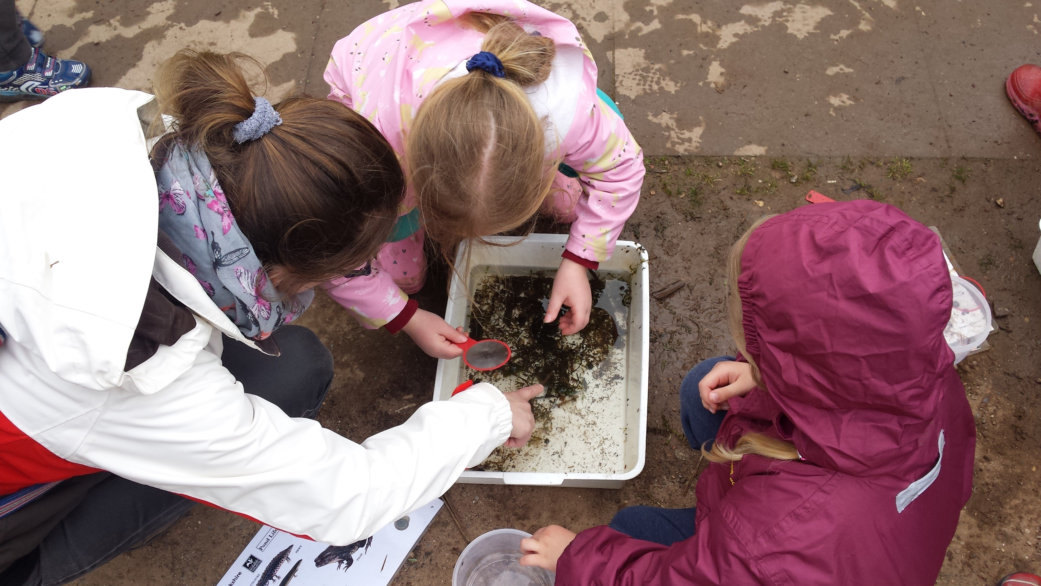 Brandon Marsh Children Discovering